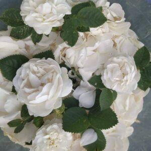 Натуральный гидролат розы